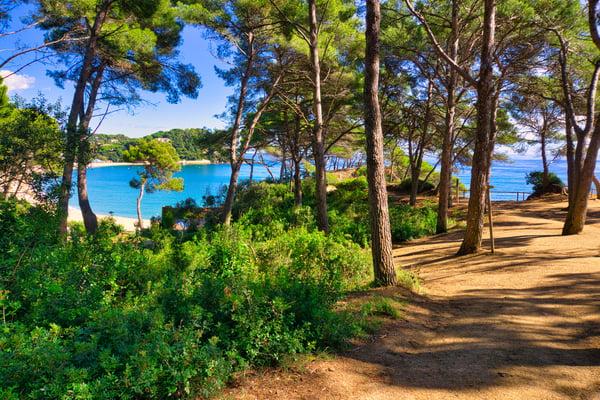 Bosc de Fenals - vistes platja